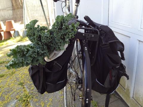 bike kale